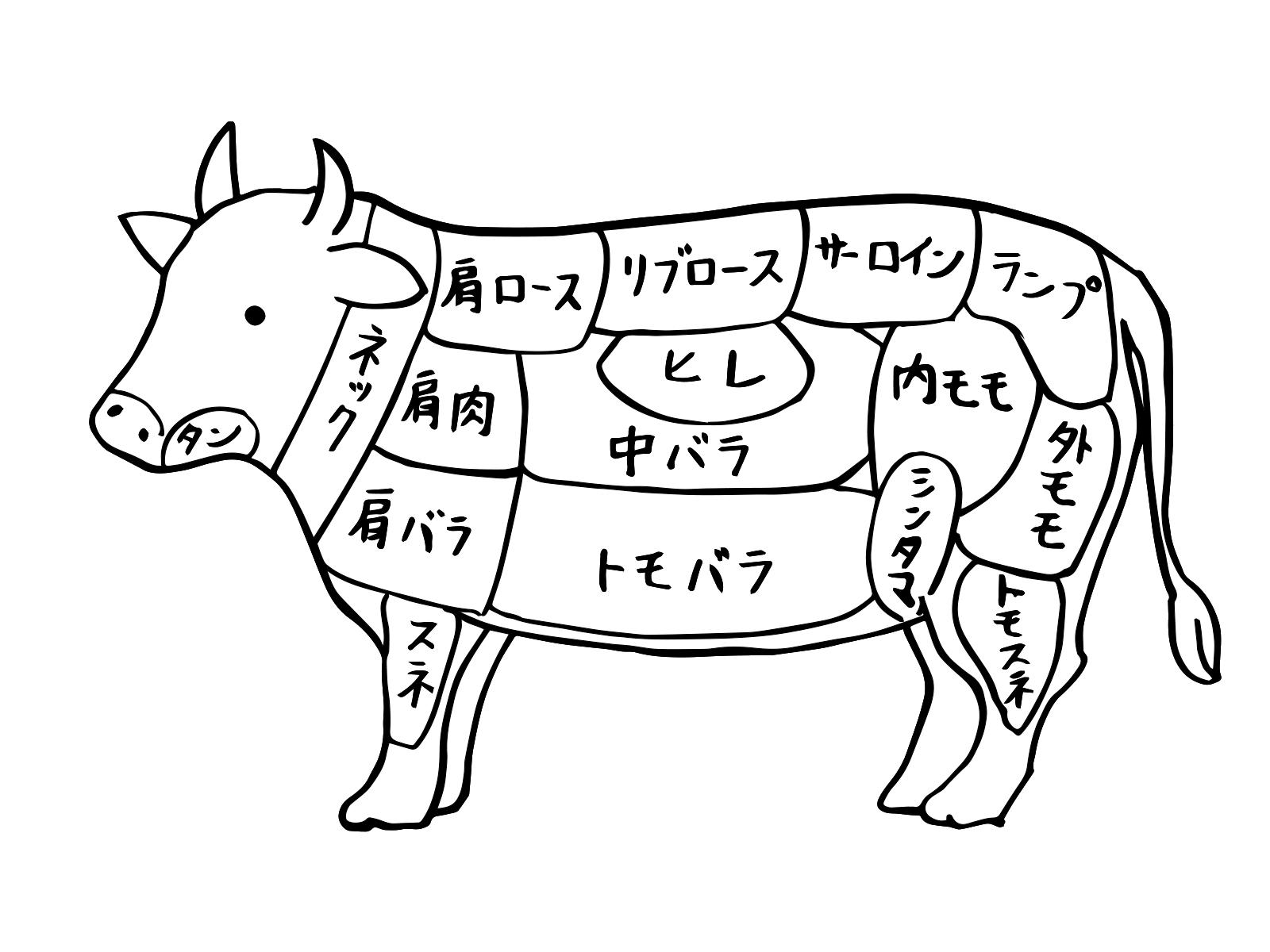 牛肉 部位.png